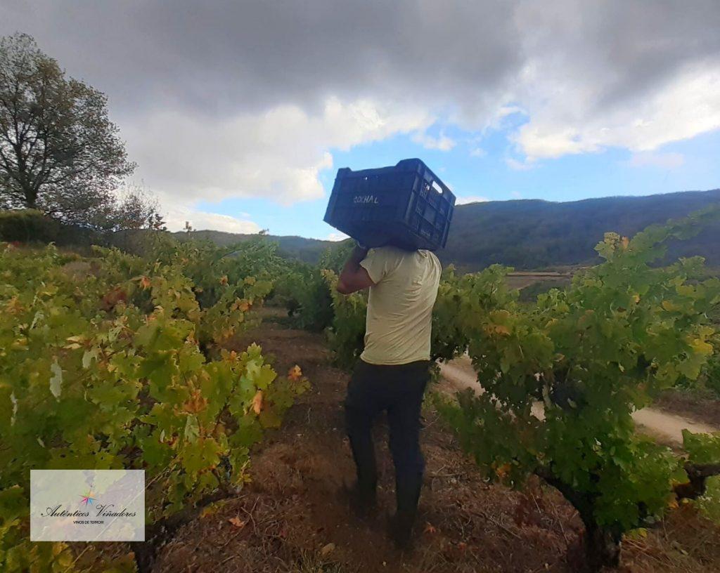 José Carlos transportando una de las cajas de 10 kg.