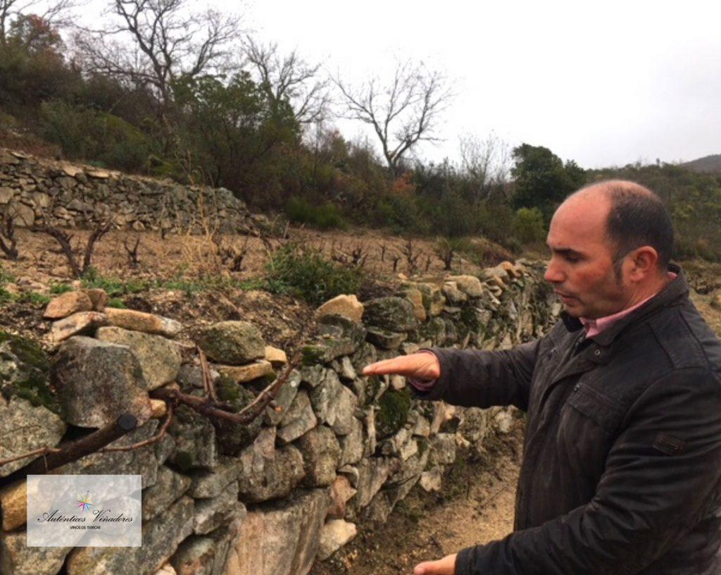 Nuestro viñador José Carlos Martín mostrando uno de sus bancales